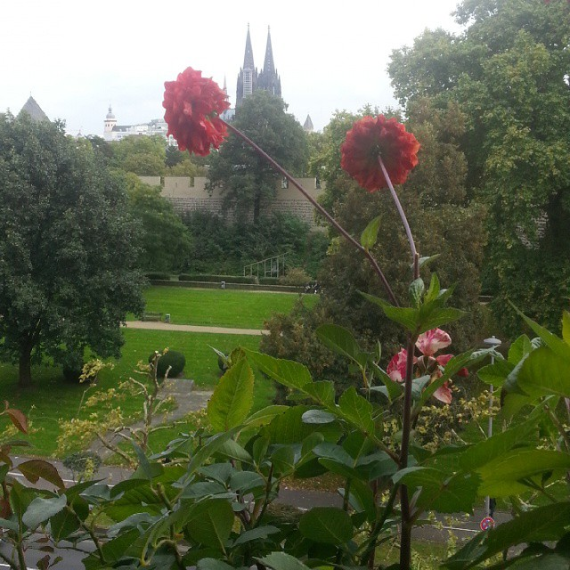 Flowers and cathredal towers. #koelle #cologne #nofilter #dom #dome #flower #tower
