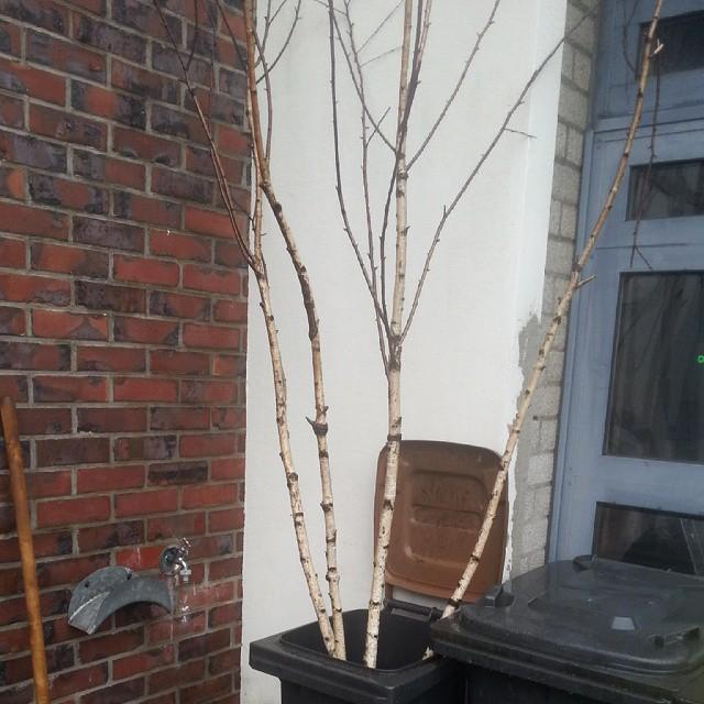 Tree ton.